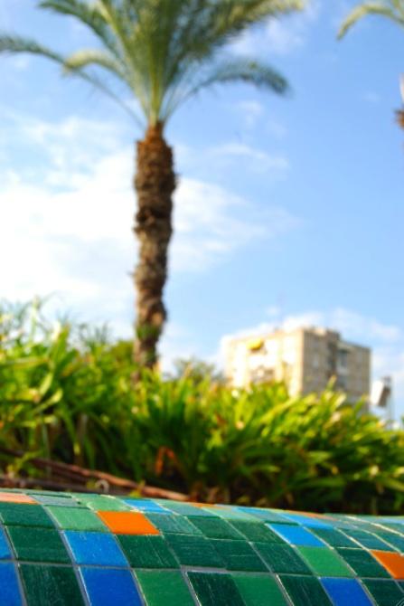 palm-tree-israel