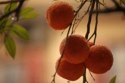 Oranges in the Rain, Thessaloniki 2013 by Sanne Kurz Kamera