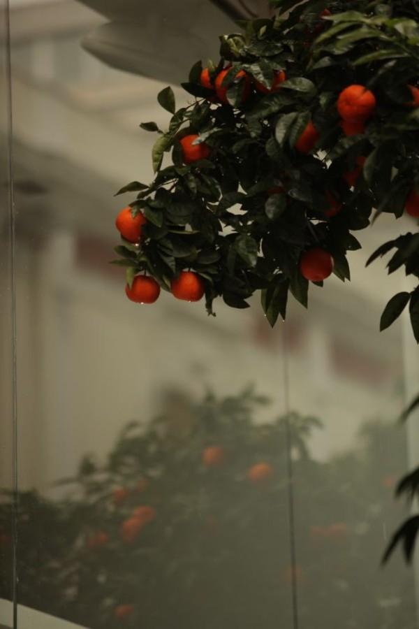 Orange Reflection. Photography by Sanne Kurz Kamera