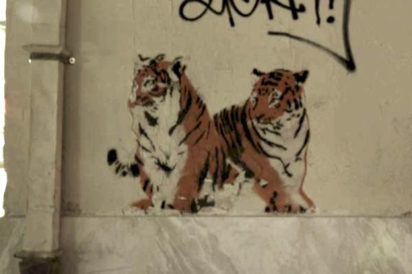 street art thessaloniki - tiger stencil